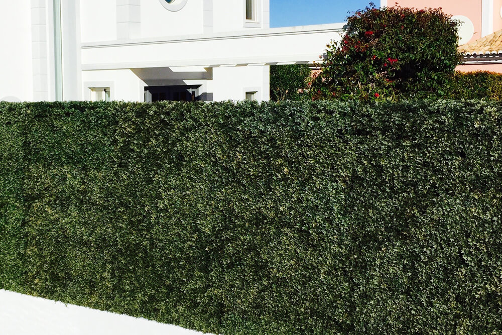 Artificial Hedges Portugal